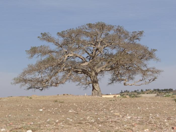 Tam gdzie rosną baobaby 6