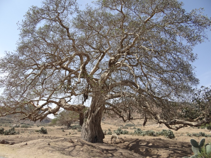 Tam gdzie rosną baobaby 8